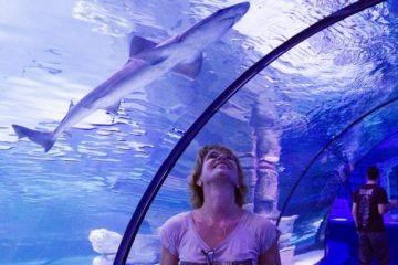 Kemer Akvaryum Turu - Denizlerin Gizemli Yolculuğuna Gidiyoruz!