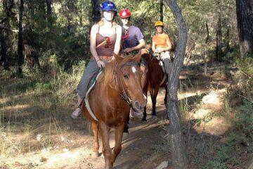Kemer At Safari - Dostlarımızla Buluşmaya Gidiyoruz!